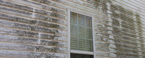 Mold on house siding
